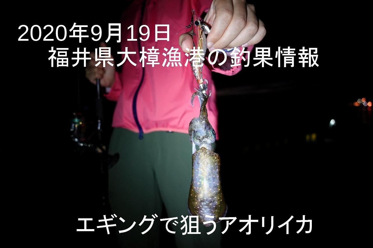 釣果 福井 県 アオリイカ